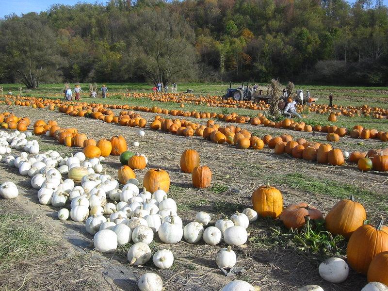 Schramm-Pick-Your-Own-Pumpkin